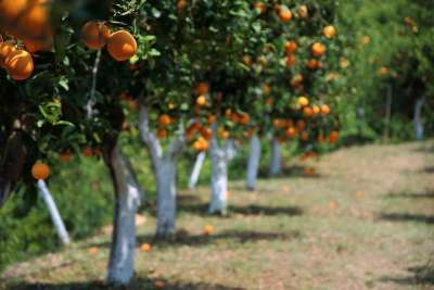 Orangevale